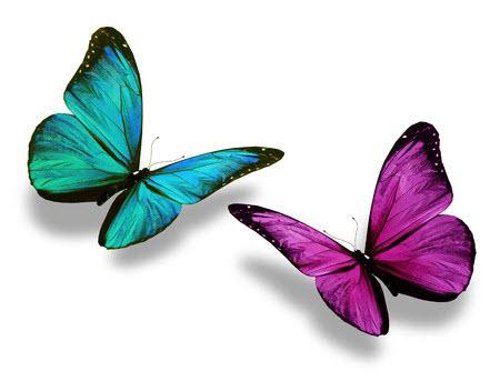 2butterflies2